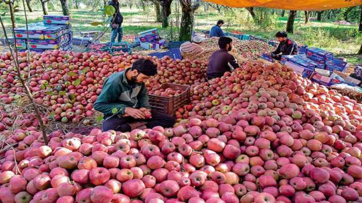 Owner of apple orchard threatened by terrorists in...- India TV