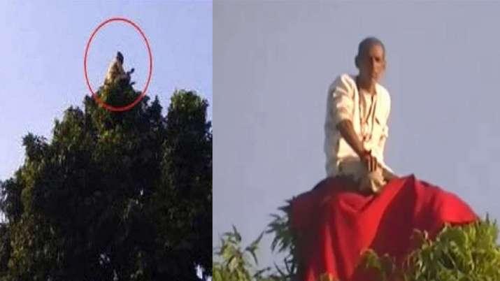 पेड़ के ऊपर बैठे 'बंदरिया बाबा' को देखने यूपी में उमड़ा जनसैलाब- India TV