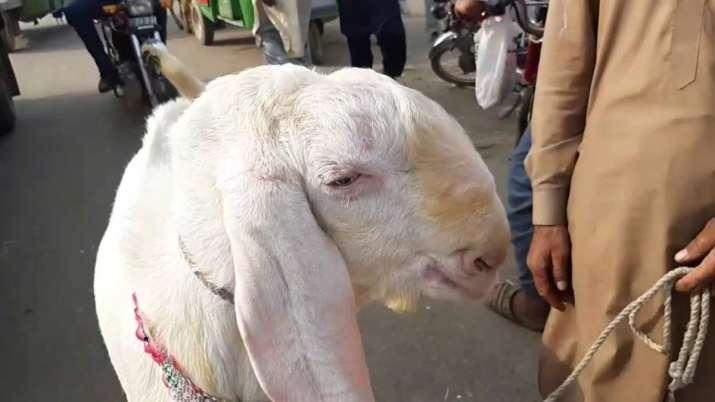 Barkid 2019 - India TV