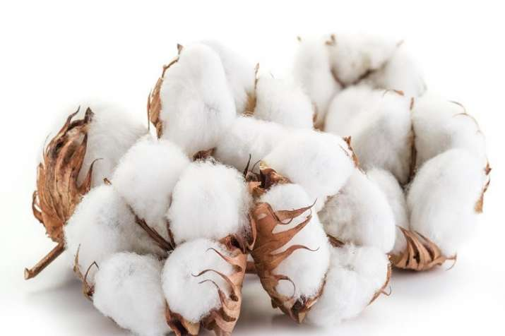 Cotton market slows down in market due to us china trade war- India TV Paisa