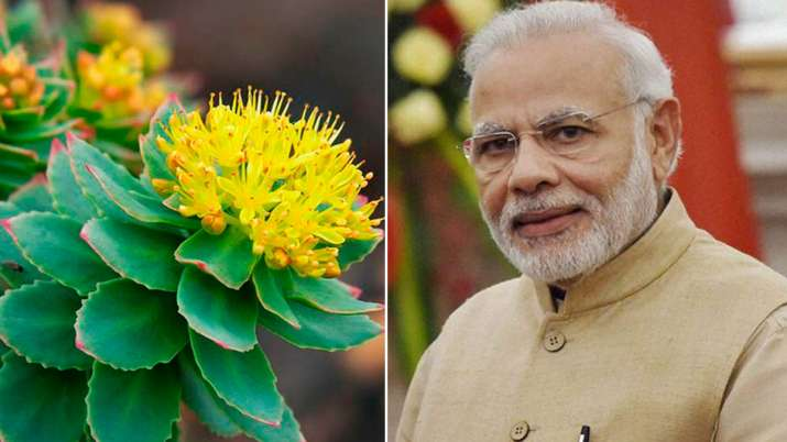 solo plant- India TV
