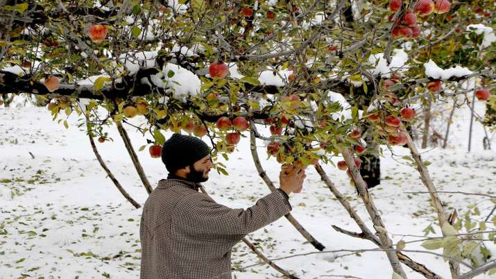 J&K admin may launch scheme next week for procurement of apples- India TV Paisa