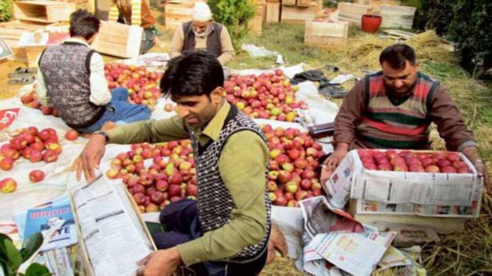 Govt to procure apples from JK farmers directly; payment through DBT- India TV Paisa