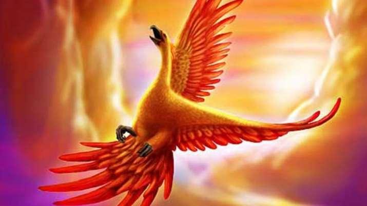 phinix bird- India TV
