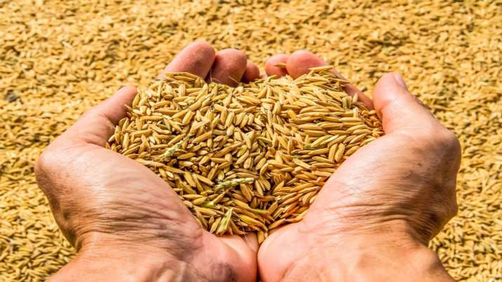 Food grain output seen at 140.57 mt in FY20 on monsoon boost- India TV Paisa