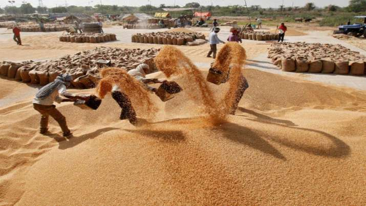 Govt raises minimum support price for wheat by Rs 85 per quintal- India TV Paisa