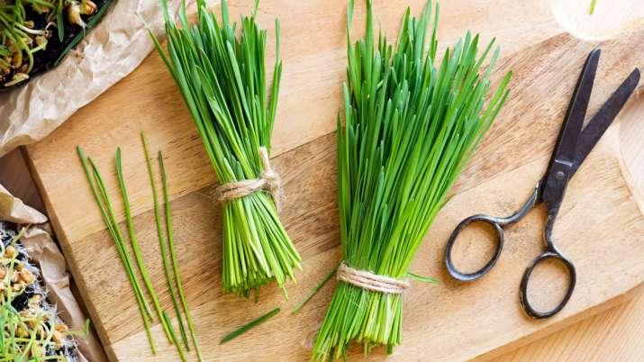 Wheatgrass- India TV