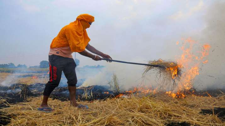 stubble burn, farmer stubble burn, punjab haryana- India TV