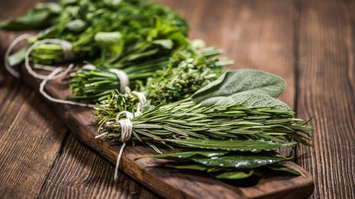 Herbs - India TV