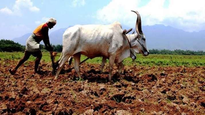 Maharashtra Farmer File Photo- India TV