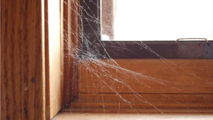 Spider web vastu tips- India TV
