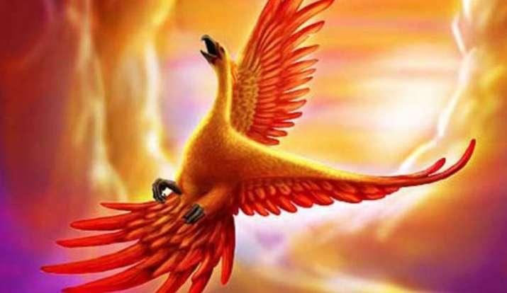 phoenix bird- India TV