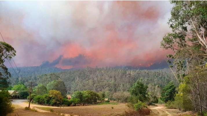 जंगलों में लगी भीषण आग की तपिश झेल रहे ऑस्ट्रेलिया में बारिश से राहत मिली- India TV
