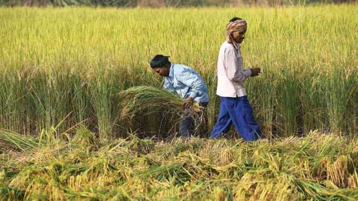 Kharif crops production likely to decline up to 53.3pc due to erratic weather- India TV Paisa