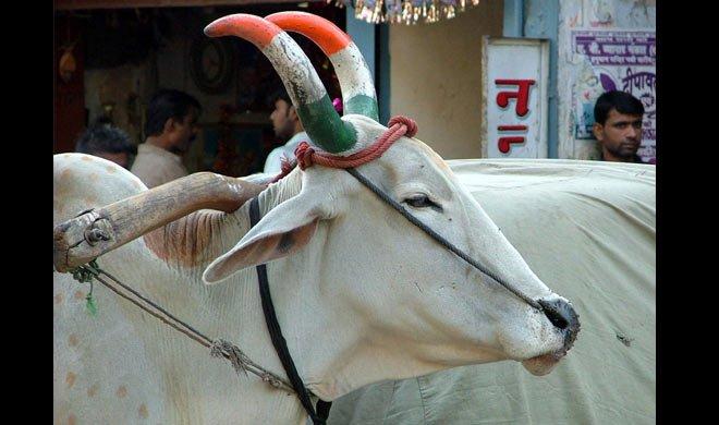 गाय को लात मारते VHP...- Khabar IndiaTV